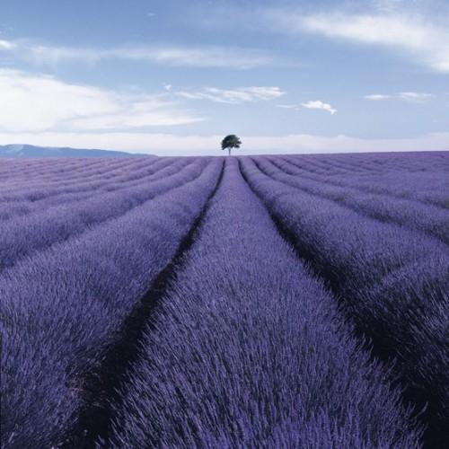 a1sx2_Thumbnail1_blu-tende-viola13.jpg