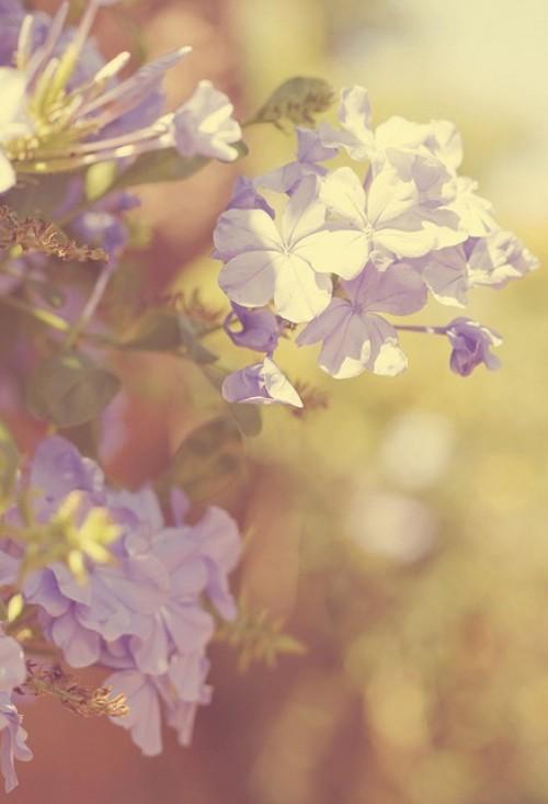 a1sx2_Thumbnail1_blu-tende-viola16.jpg
