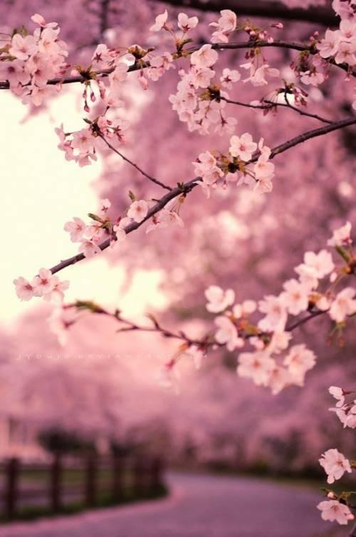 a1sx2_Thumbnail1_vestirsi_primavera_5.jpg