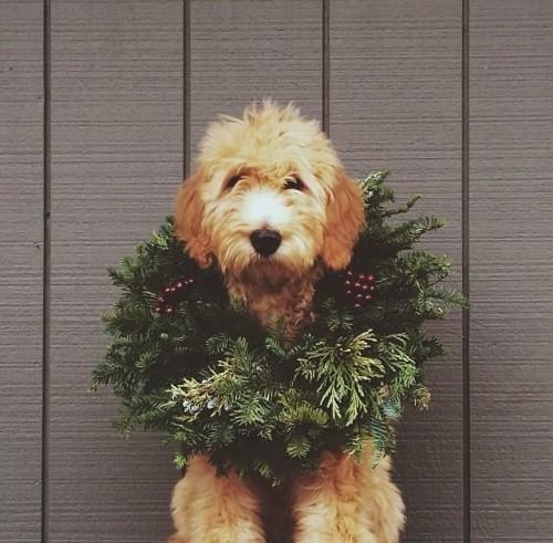 a1sx2_Thumbnail1_Christmas_home_decor82.jpg
