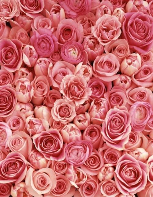 a1sx2_Thumbnail1_perchcivergognamo_pink10.jpg