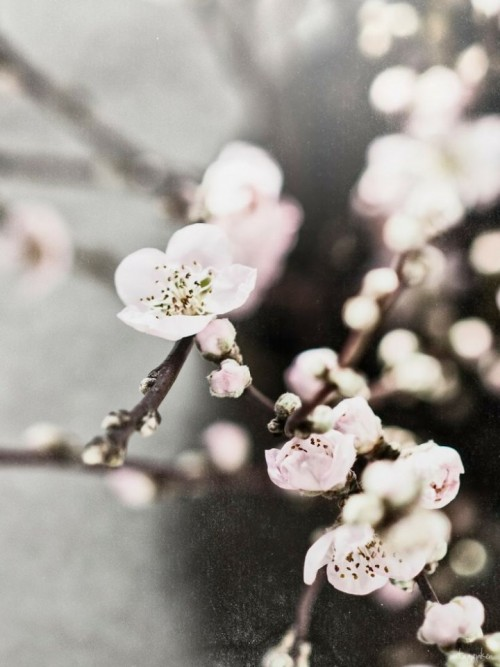 a1sx2_Thumbnail1_perchcivergognamo_pink3.jpg