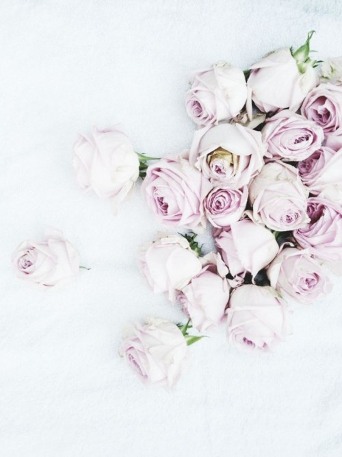 a1sx2_Thumbnail1_perchcivergognamo_pink4.jpg