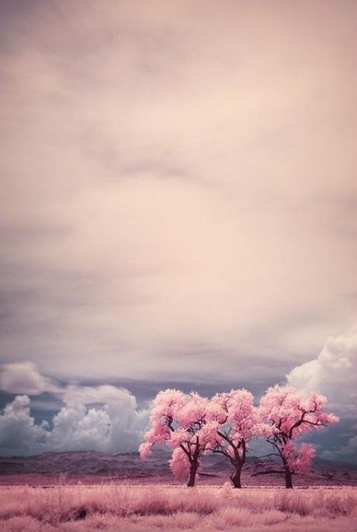 a1sx2_Thumbnail1_perchcivergognamo_pink8.jpg