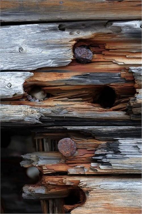 a1sx2_Thumbnail1_Brown6.jpg
